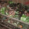 Компост из пищевых отходов